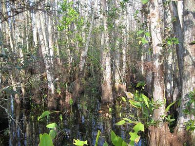 Scenery CorkscrewSwamp_IMG_0039_10-01-02