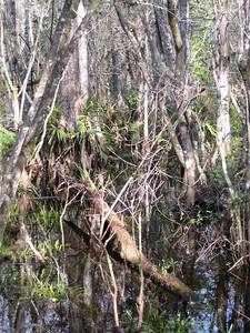 Scenery CorkscrewSwamp_IMG_0041_10-01-02