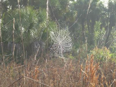 Scenery CorkscrewSwamp_IMG_0038_10-01-02