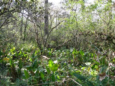 Scenery CorkscrewSwamp_IMG_0042_10-01-02