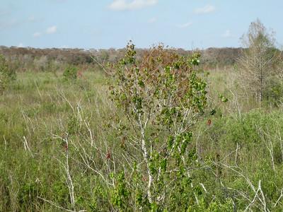 Scenery CorkscrewSwamp_IMG_0043_10-01-02