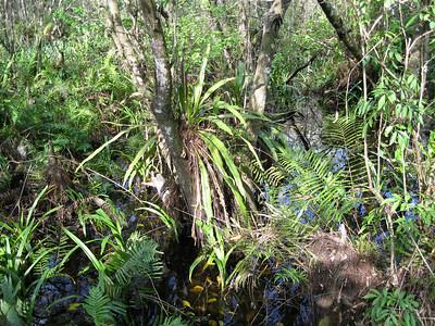Scenery CorkscrewSwamp_IMG_0045_10-01-02