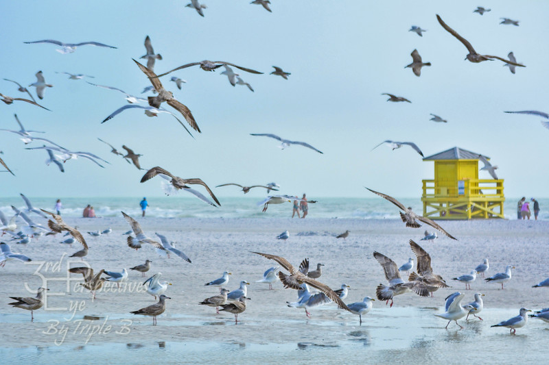 Scattered - Siesta Key, FL