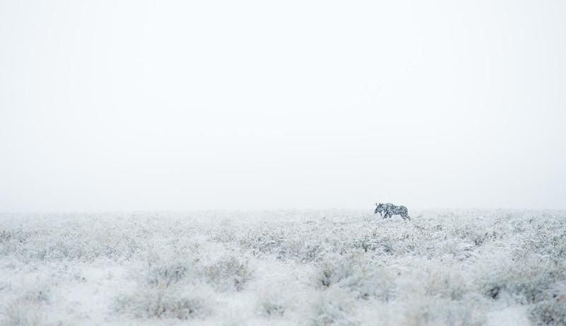 Moose in Storm