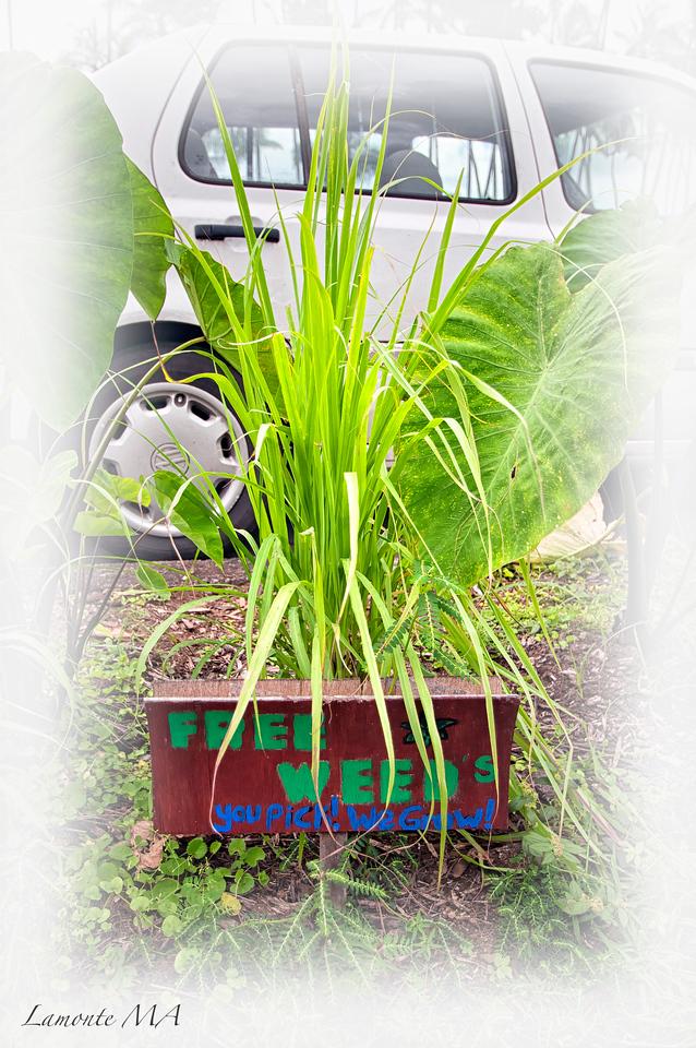 Free Weeds
