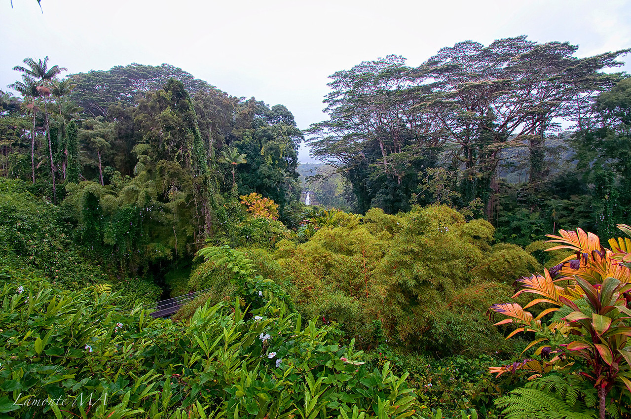 Akaka Falls Big Is4