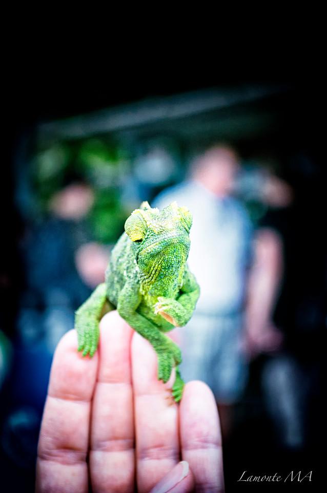 Chameleon2