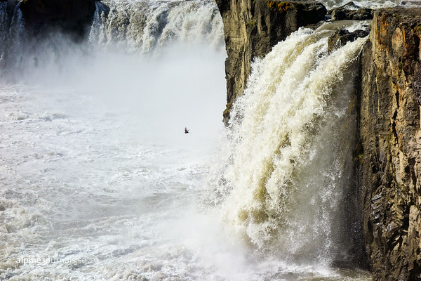 A bird circling around the powerful falls of Goðafoss.