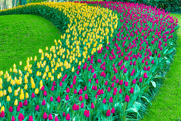 Foolow the Tulip Highway