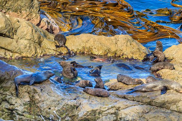 More seal pups