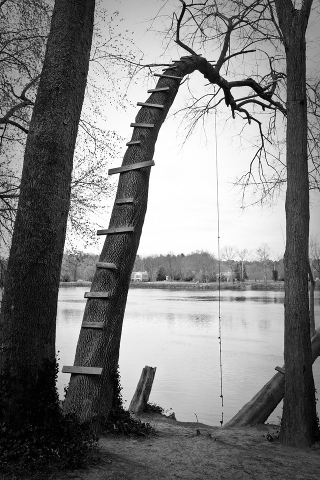 Rope on a tree (1 of 1)