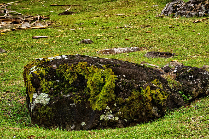 Organic growth moss, Lichen.
