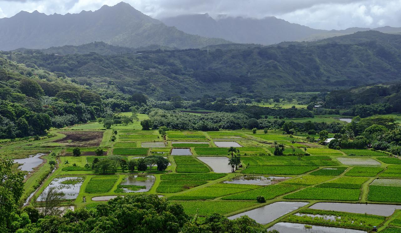 Pano commercial Taro fields Kauai Napili