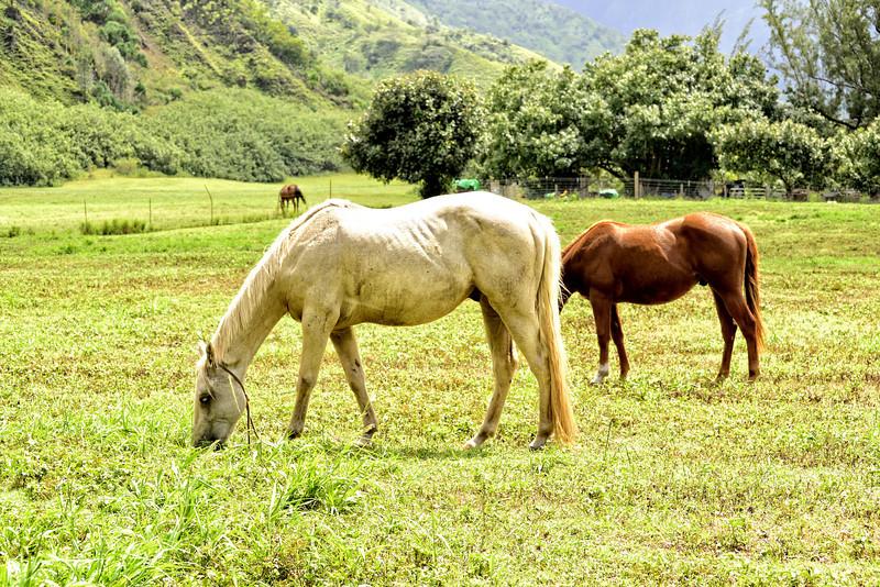 NO GMO Horse Food