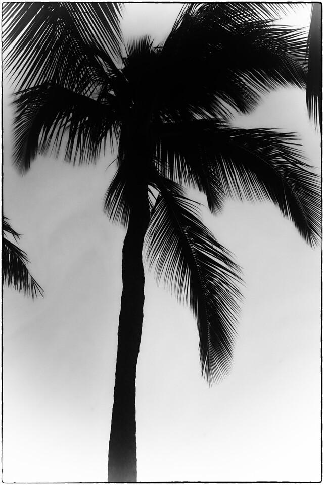 Midnight Palms B & W