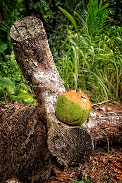 Kauai Coconut Rest Stop