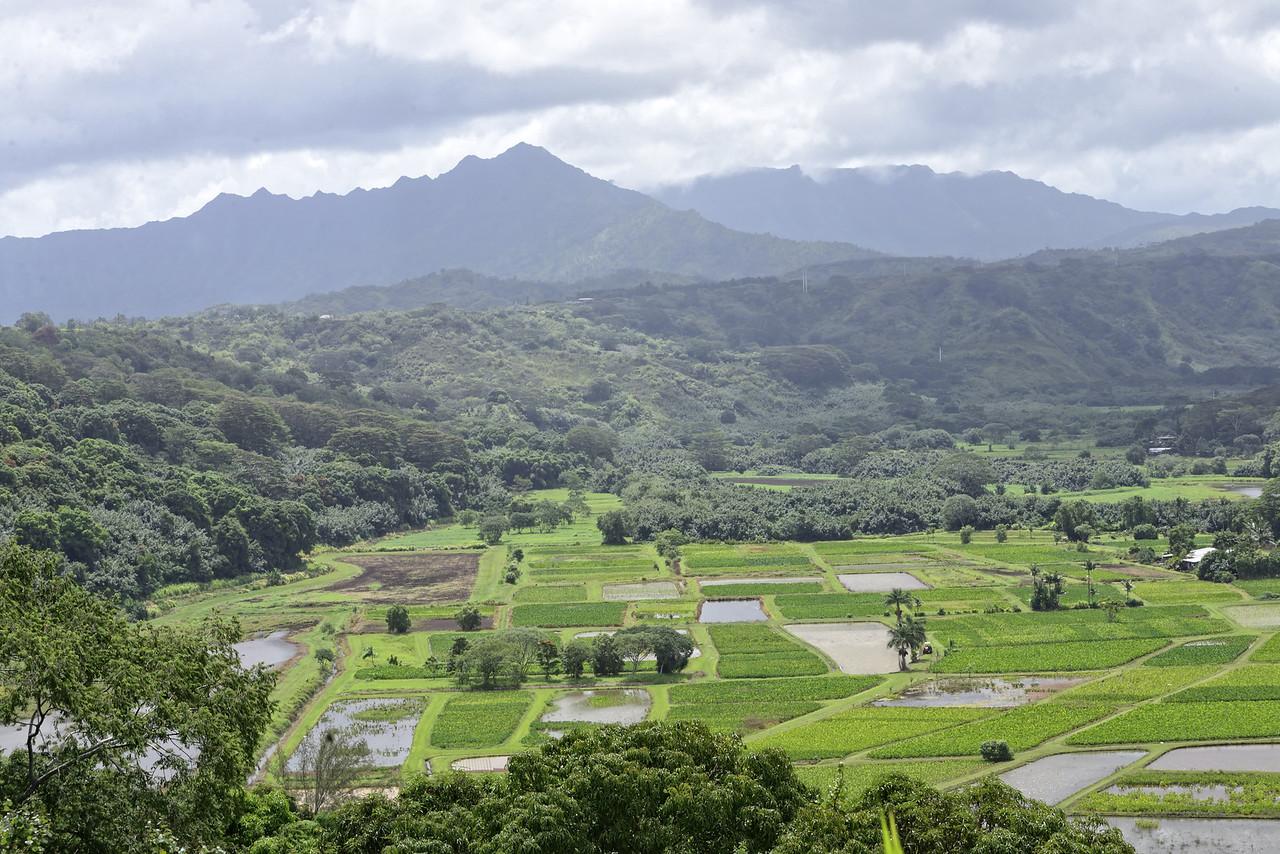 Taro Fields Kauai4