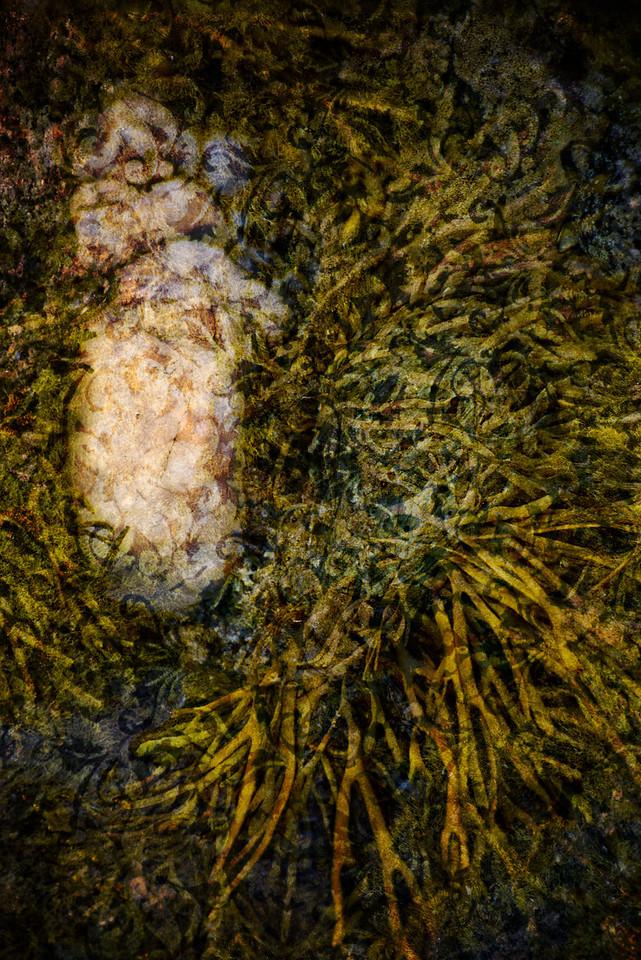 Rock & Seaweed Brocade Cool