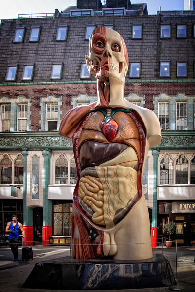 Anatomical Man