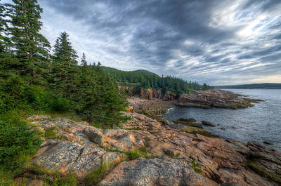 Rock and Pines of Acadia