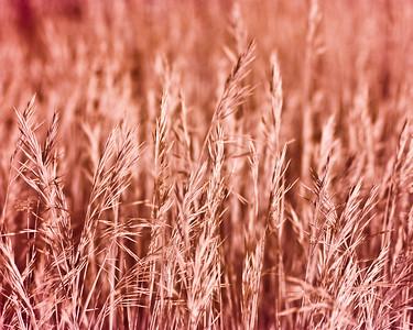 Infrared Grasses