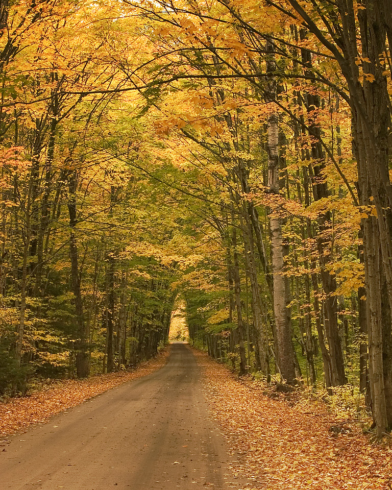 Tunnel of Trees, Keweenaw Peninsula, Upper Peninsula, Michigan