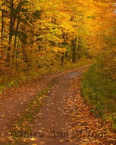 A tree line road through Ottawa National Forest in Upper Peninsula, Michigan