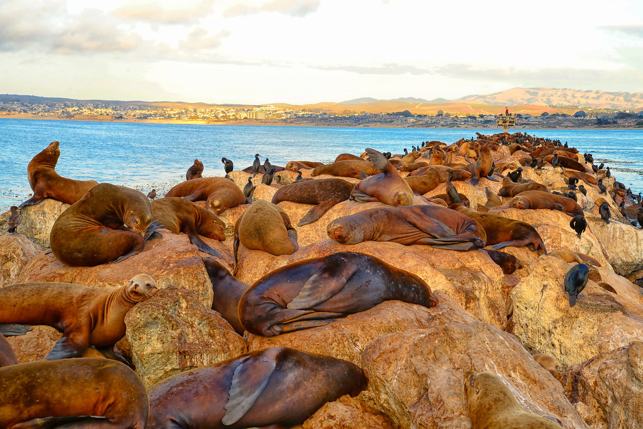 Sea Lion Jetty