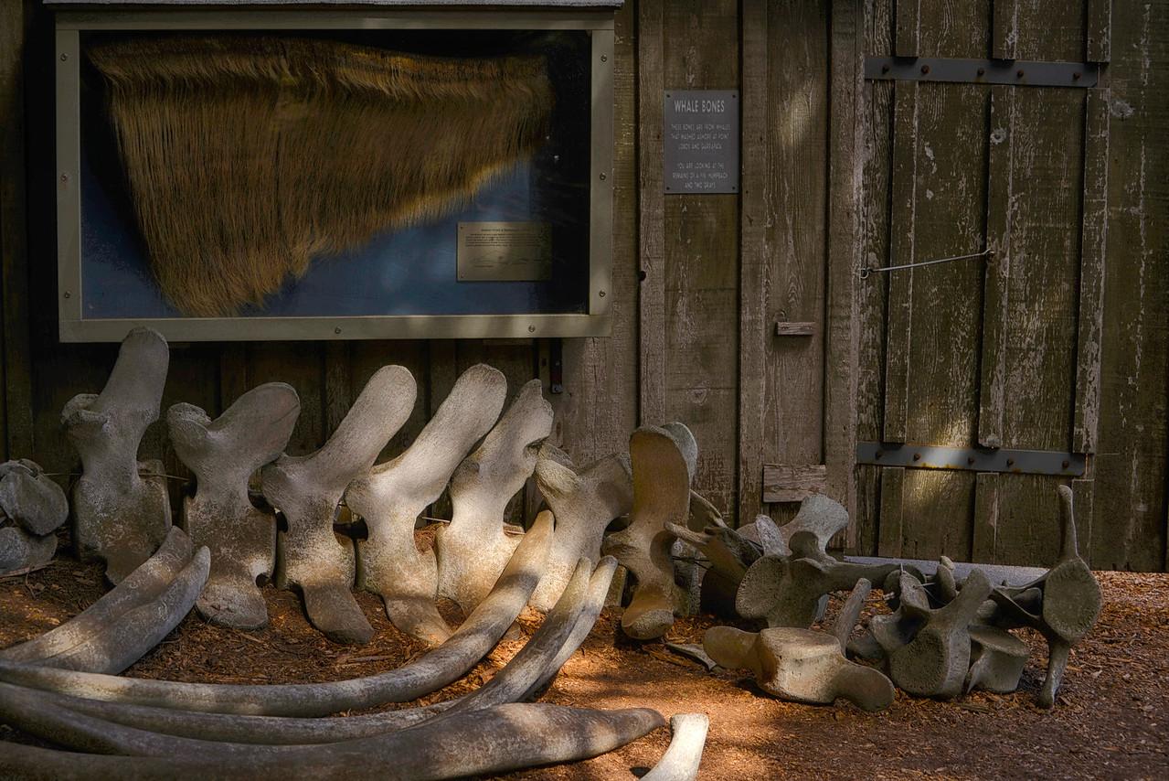 Whales Bones