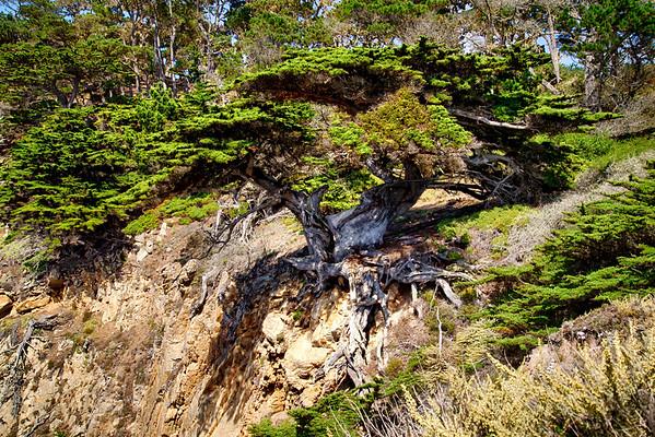 Monterey Carmel - Update 2016