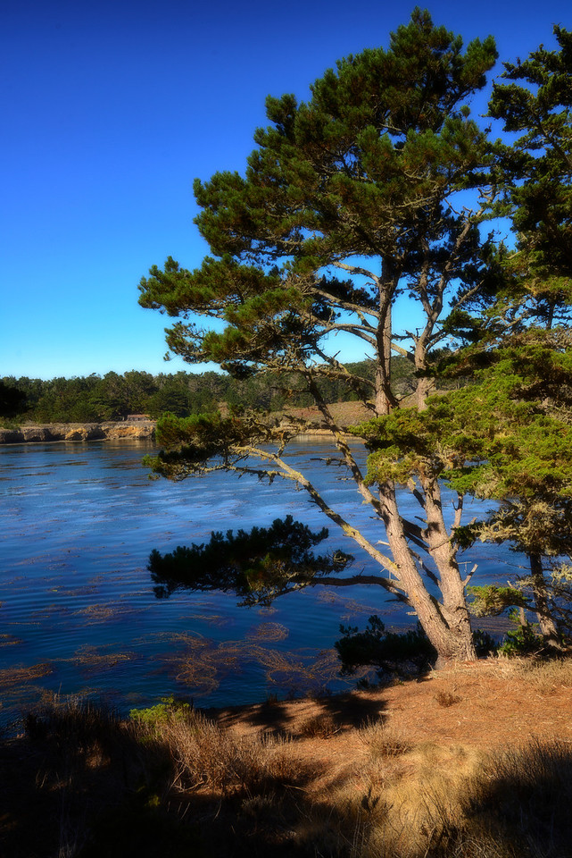 Point Lobos - point
