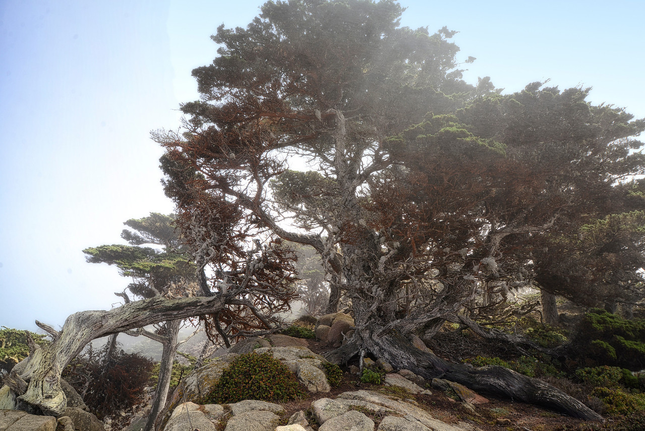 Carmel Point Lobos MP Elder