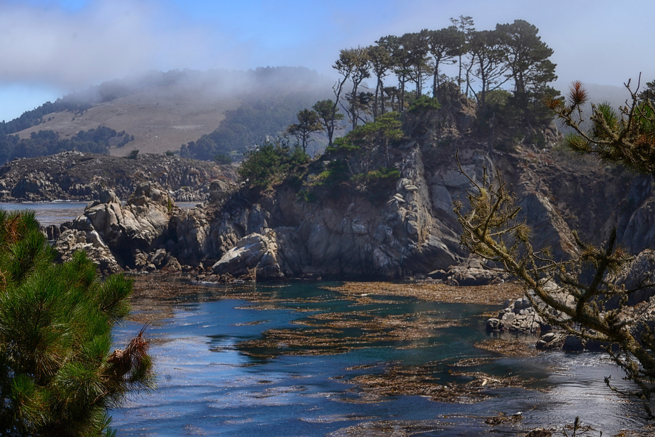 Point Lobos - Fog