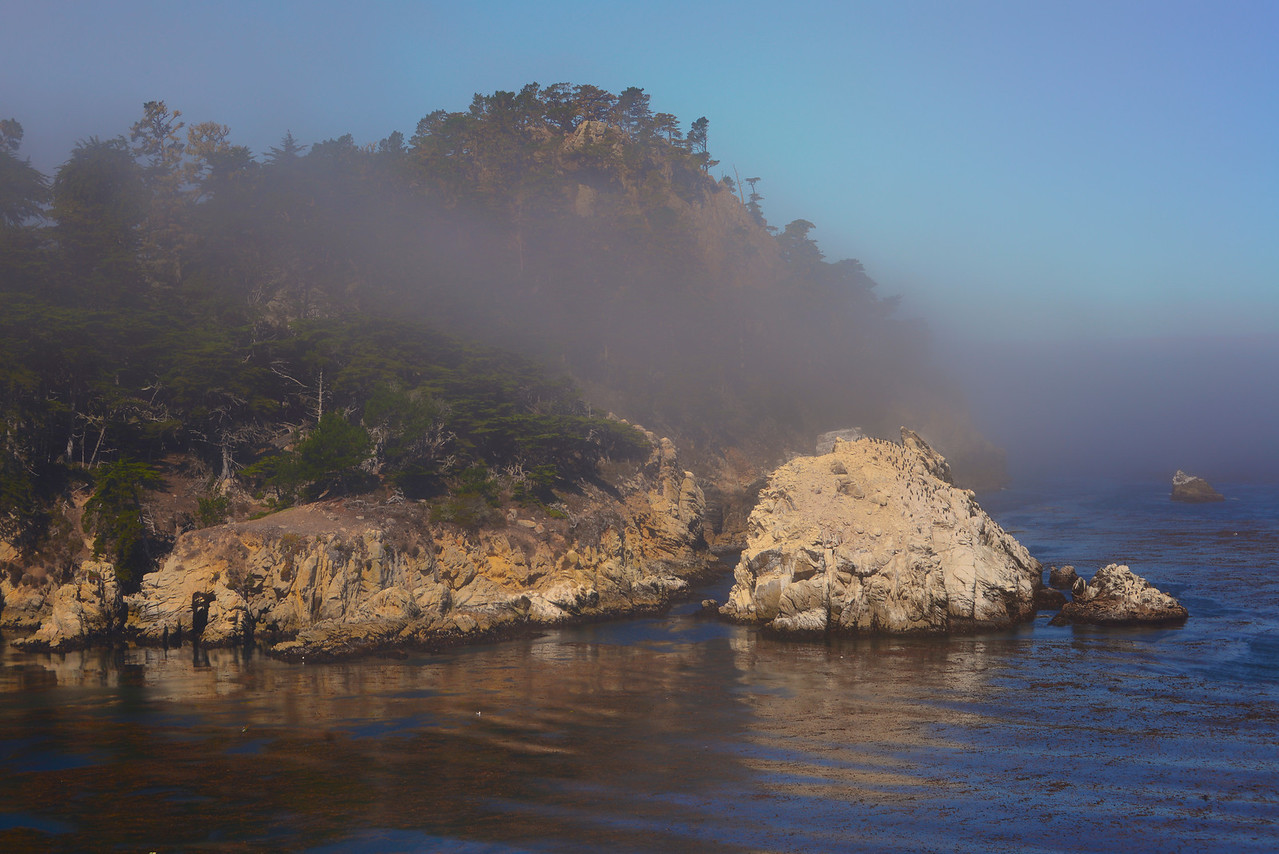 Point Lobos fog1