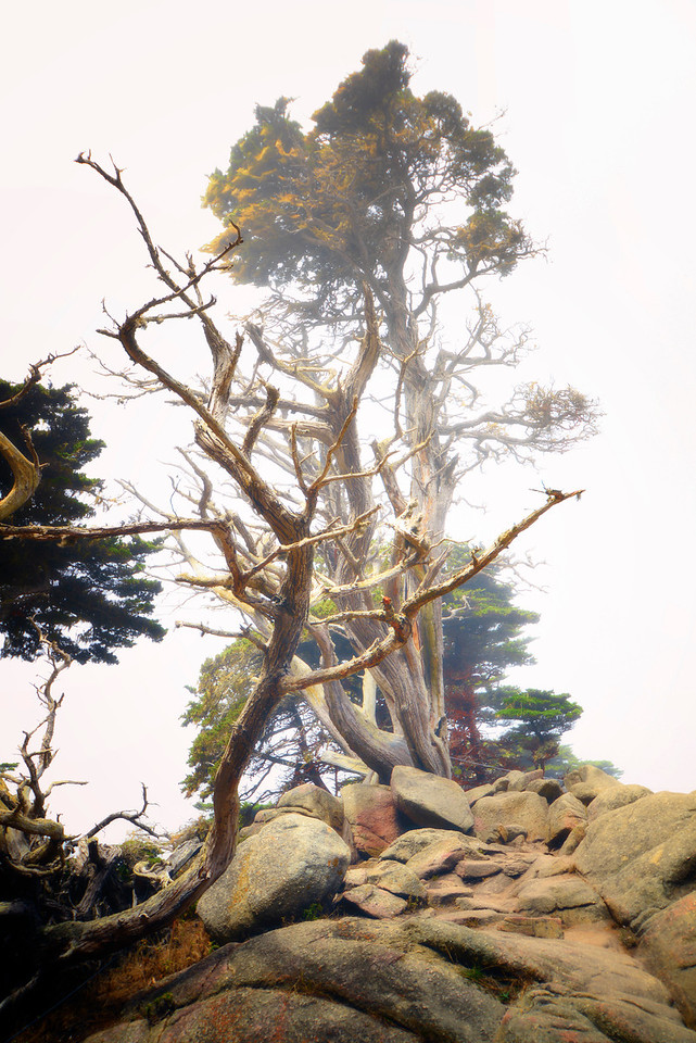 Carmel Point Lobos4
