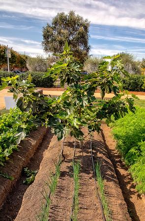 CIA Gardens Copia Napa