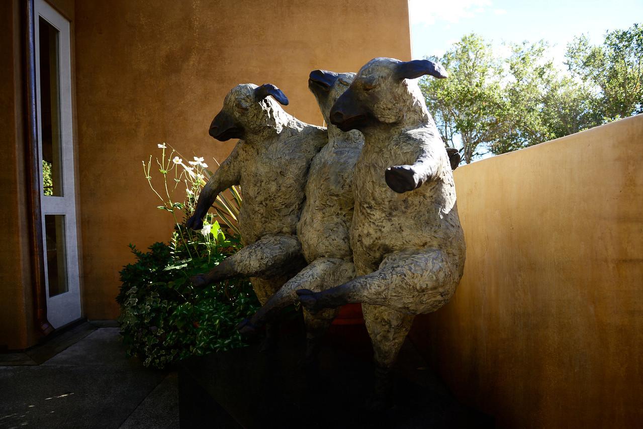Three dancing sheep