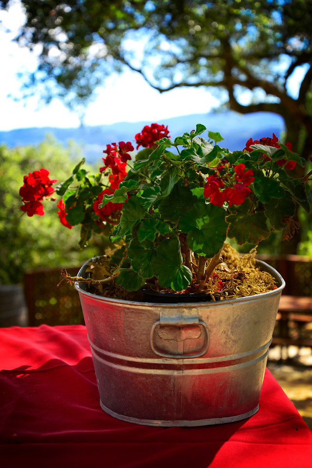 Napa table flowers1