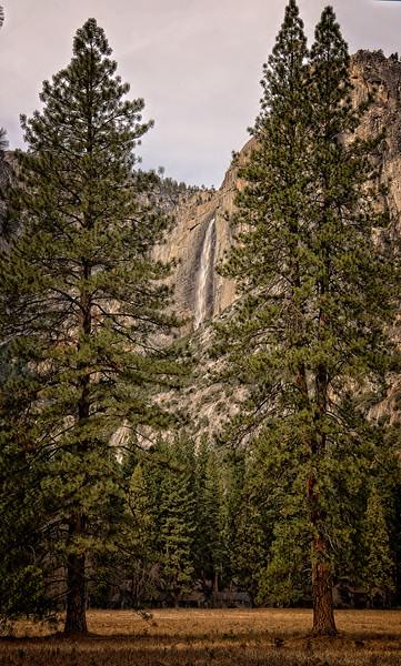 Tree frame falls