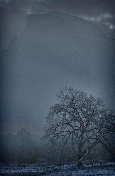 Beauty thru the Fog