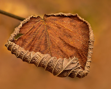 21465_101219_leaf stacked