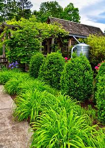 #035-Heritage Garden Hedges