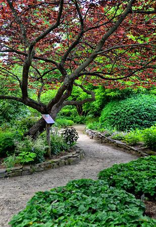 #037-Plants of Promise Garden