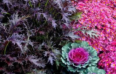 #008-Quilt Garden Plants