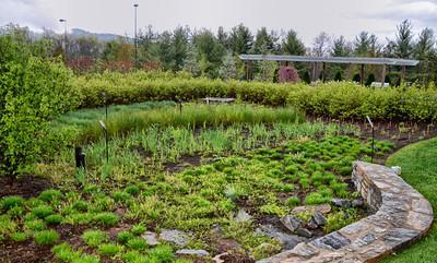 #029-Rain Garden