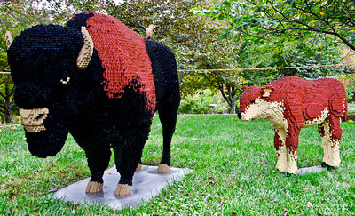 """Bison and Calf"" Mother Bison: 45,143 LEGO pieces; 80""x26""x50"" Calf: 16,229 LEGO pieces; 50""x15""x33.5""  ""Some Assembly Required"" LEGO Brick Sculpture of artist Sean Kenney October 19, 2013 through January 5, 2014"