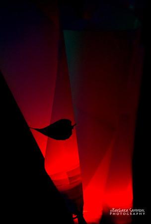Luminaries - Winter Lights 2014