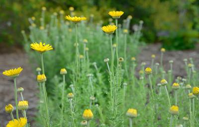 #039-Heritage Garden Flowers
