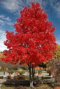 #022-Fall Colors