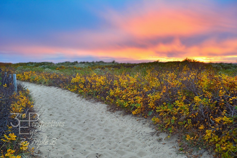 Cape Cod Compromise - Cape Cod National Seashore, Mass. - USA
